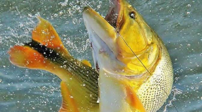 Pesca Esportiva - Pesca