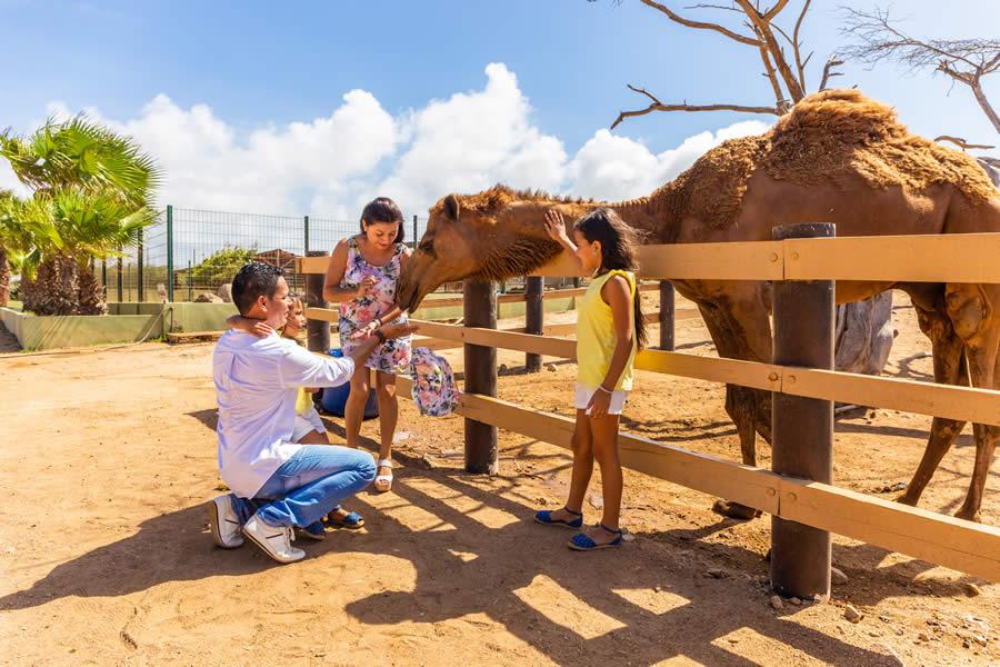 Aruba Philips Animal Garden