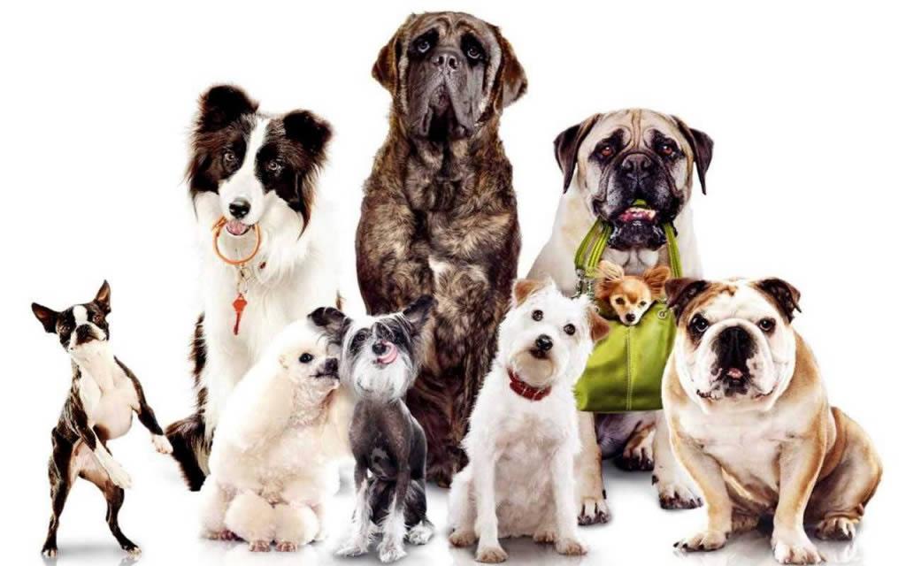 CFMV - Proteção de Animais - Conselho Federal de Medicina Veterinária