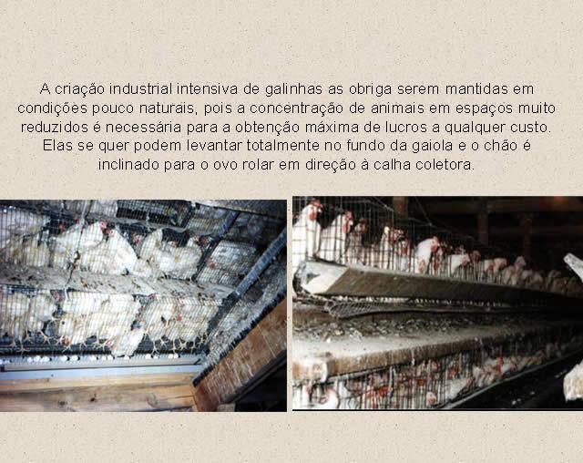 Produção de Ovos de Granja