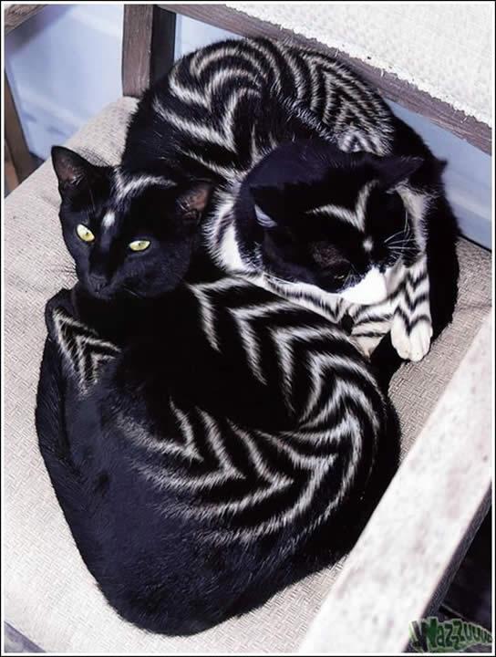Maquiagem de gatos - Makeup cats -  Maquillaje de gatos